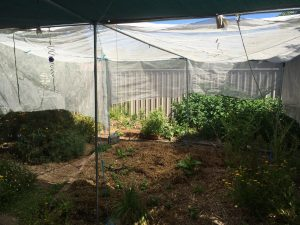 Shade cloth on a frame protecting a large area of garden