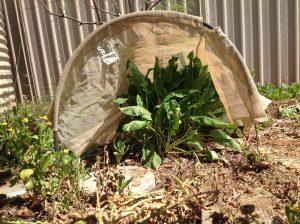 Shade cloth protecting an individual plant